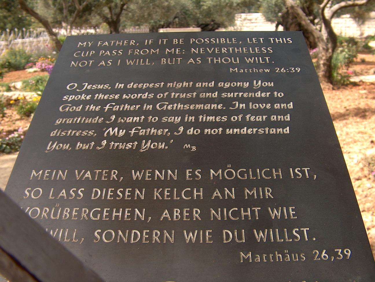 Der Garten Gethsemane Jerusalem Bilderserie Fotos Photos Für Dsl